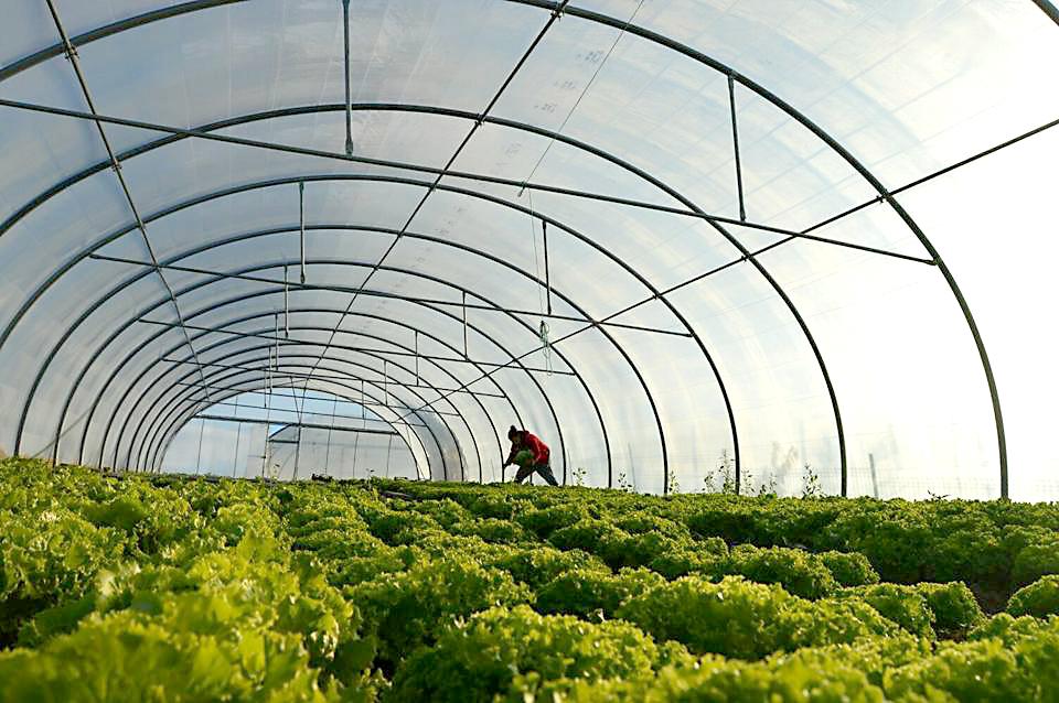 Producción ecológica, oportunidad para Asturias