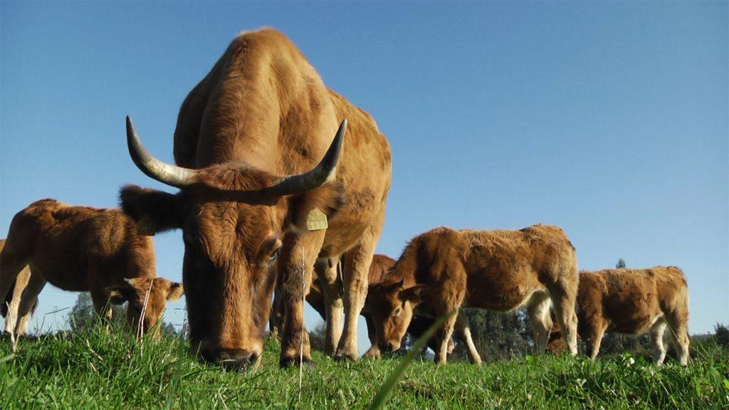Asturias ejecuta un tercio del Plan de Desarrollo Rural