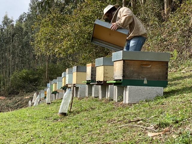 La lucha contra la avispa asiática da un salto
