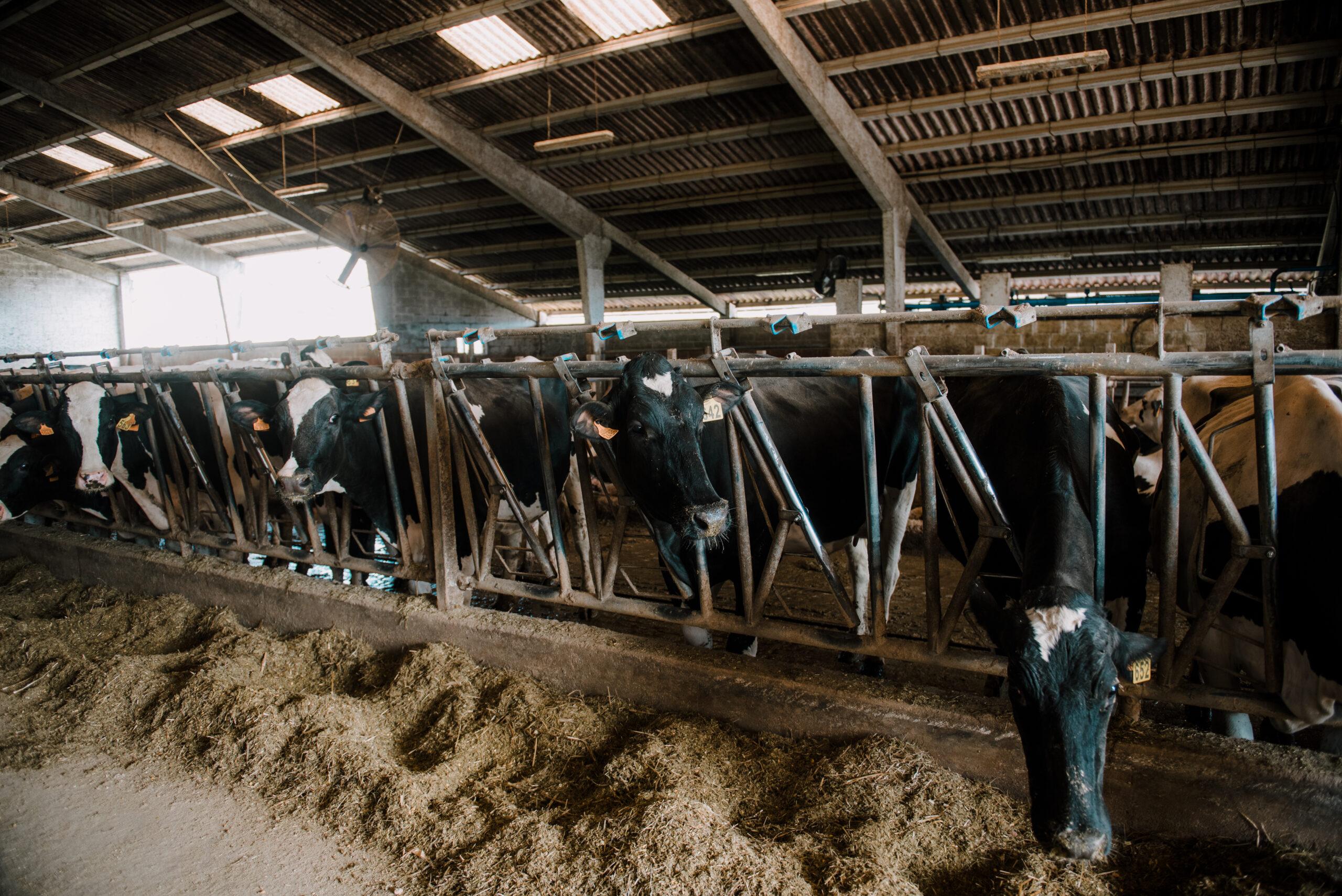 Notas sobre ganadería intensiva