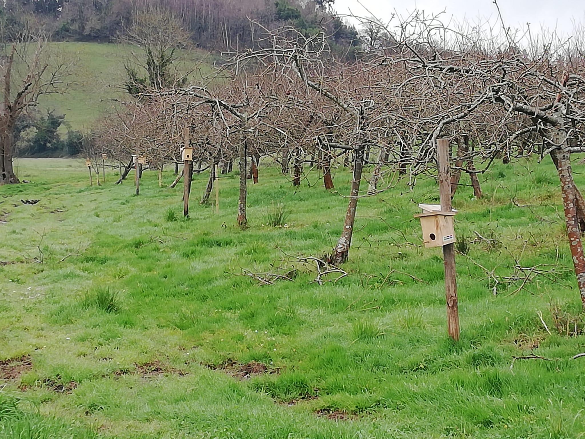 Fauna aliada en el cultivo ecológico